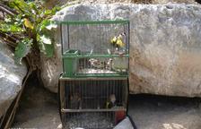 Imagen de los pájaros intervenidos.