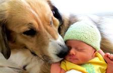 Què cal saber quan arriba un nadó a una família amb gos?