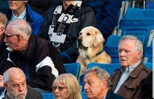 Yardley, el gos futboler que segueix els partits de Pollok FC des de la grada
