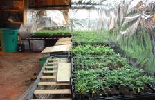 La policía encontró miles de plantas en crecimiento preparadas para venderse a cultivadores.