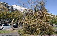 El vent fa caure diversos arbres a Salou