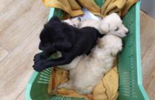 Troben quatre cadells abandonats a la riera de Cambrils