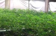 El valor estimat de les 7.000 plantes  estimen que el valor en el mercat negre de les plantes comissades seria de més d'1.700.000 euros.