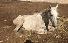 Al mes de juliol, alguns cavalls mostraven símptomes de maltractament i estaven desnodrits.