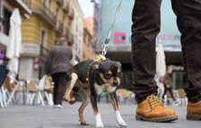 Una plataforma difondrà els animals que es recullen a la via pública a Reus