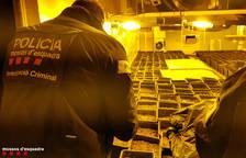 Desarticulada una organització que cultivava marihuana en una nau del polígon Francolí