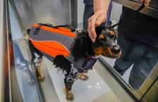 Inauguran en Riudoms el primer centro de fisioterapia y rehabilitación de animales