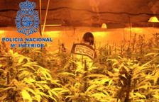 Desarticulat un grup criminal que cultivava marihuana a Puigdelfí i la venia a Barcelona
