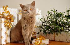 El Col·legi de veterinaris pide proteger las mascotas contra la Covid-19