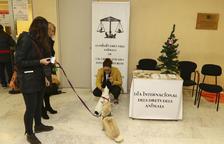 El Col·legi d'Advocats de Reus atén gairebé 30 casos d'animals maltractats