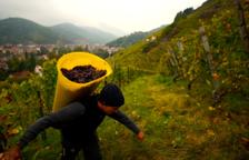 La DO Montsant ha venut més de 6 milions d'ampolles de vi aquest 2019
