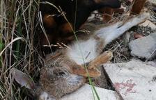 Un veí de La Floresta denuncia la presència de llaços il·legals per a caçar conills