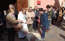 La tradicional benedicció dels animals es va dur a terme a l'església de Sant Llorenç.