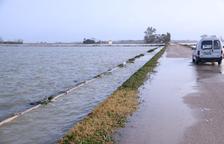 Arrossars del delta de l'Ebre acumulen làmines d'aigua del mar de fins a 1,5 metres de profunditat