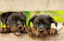 El lenguaje que hay que conocer de los perros: las señales de calma