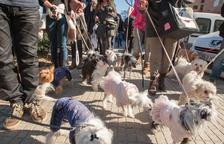 Más de 800 perros entraron en el censo de animales de compañía de Reus el año pasado