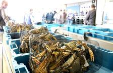 En cuatro años se han capturado más de 2 millones de cangrejos azules, la mayoría en las Terres de l'Ebre