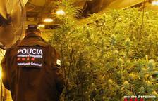 Els Mossos d'Esquadra desmantellen un cultiu de marihuana i detenen tres homes a Cambrils