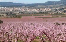 La Ribera en Flor torna a posar en valor la floració dels arbres fruiters per atreure visitants