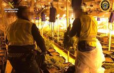 Desmantelada una plantación de marihuana en un chalet de los Masos de Coma-ruga, en el Vendrell
