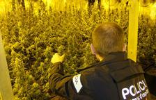Los Mossos d'Esquadra desmantelan una plantación de marihuana en la Ametlla de Mar y detienen a dos hombres