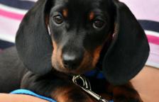 Hauria de desinfectar les potes del meu gos després del passeig?