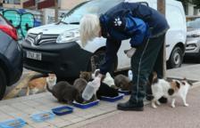 Els qui es cuiden dels felins, que agreixen el suport a la situació, van sols i duen guants i mascareta.