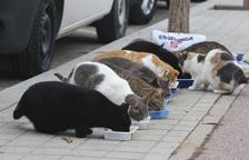 Cabra del Camp esterilitzarà els gats del carrer per reduir les colònies