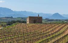 La Terra Alta reactiva la borsa de temporers per fer la poda en verd de la vinya