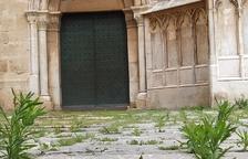La natura s'obre pas al Pla de la Seu de Tarragona