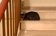 Buscan a la familia de una gata escondida durante 5 días en el interior de una escalera|escala