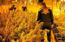 Decomissen 3.000 plantes de marihuana en unes naus del polígon Catalunya Sud, a Tortosa