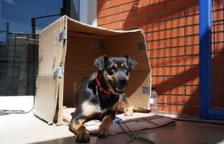 Chika, la perrita confinada en el Pabellón del Serrallo encuentra acogida
