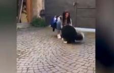 El emocionante reencuentro de un perro y su propietaria después de dos meses de confinamiento