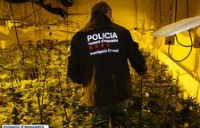 Desmantelan una plantación de marihuana de 640 plantas en una nave de Horta de Sant Joan
