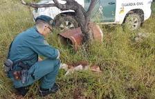 La Guardia Civil investiga un hombre de Tortosa por un presunto delito de maltrato animal