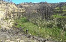 La Confederación Hidrográfica del Ebro restaura los cauces de los ríos en Benifallet y Vinebre