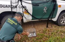 La Guàrdia Civil denúncia a un veí de La Galera per capturar ocells fringíl·lids amb una xarxa japonesa