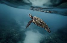 Mor una nena de 5 mesos després d'ingerir sang de tortuga per evitar el coronavirus