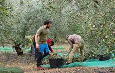 El aceite de oliva también se prueba en las redes