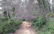 L'abandonament de la vegetació fa de la zona de Boscos de Tarragona un «polvorí»