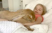 Cocoa Puff, el conejo gigante que vive como una persona