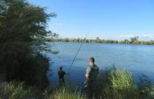 La Guardia Civil impone en un fin de semana 64 sanciones por pesca recreativa furtiva en el Ebre