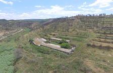 La zona cremada per l'incendi de la Ribera d'Ebre, un any després a vista de dron