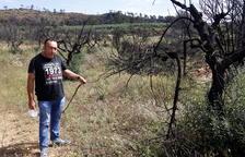 Els agricultors afectats pel foc de la Ribera, decidits a refer-se