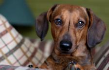 El Consell de la Ribera d'Ebre formalitza la gestió del servei de protecció d'animals domèstica