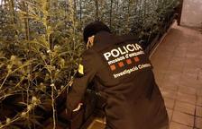 25 detinguts durant el dispositiu policial per tràfic de drogues al Vendrell