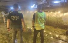 Desarticulada una organització criminal que cultivava marihuana a Roda de Berà