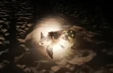 Localizan una tortuga alelada en la playa de la Pineda