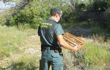 Investigan a un hombre por capturar ilegalmente jilgueros en Bítem